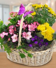 A wicker handbasket filled with blooming plants in yellows, purples and pinks.