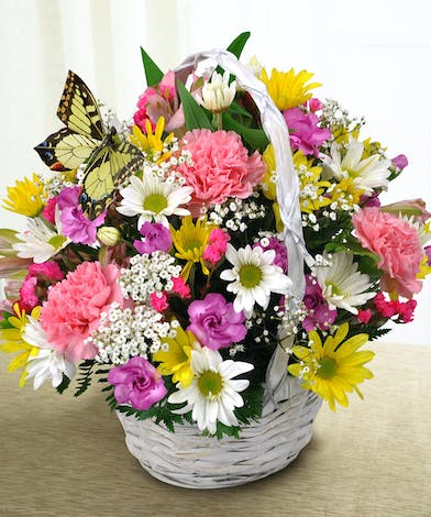A seasonal basket of long lasting carnations, daisies and alstroemeria accented with a butterfly