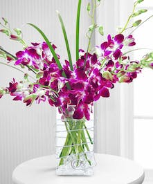 Vase filled with purple orchids
