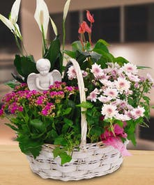 Our hand made and custom designed spring Blooming Garden Baskets feature the season's most beautiful blooming plants.