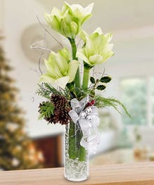 Unique design of amaryllis and holiday decor
