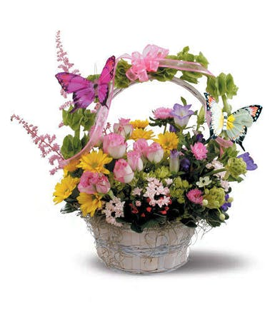 Garden roses, daisies, bouvardia and Bells of Ireland with butterfly accents.