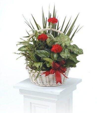 Basket filled with a variety of green plants and red flowers.