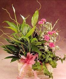 Dish garden with fresh cut flowers in a basket with a bow.