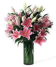 Pink Oriental lilies in a tall glass cylinder vase.