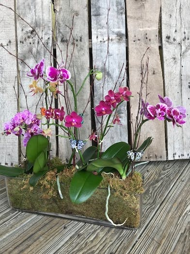 Orchid plants in a long glass container.