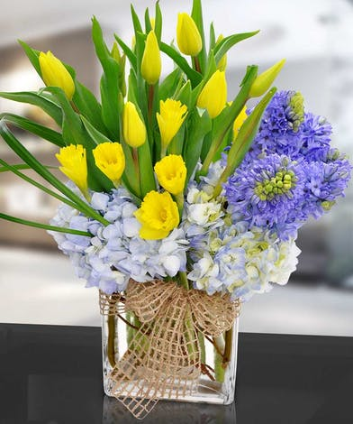 Yellow tulips and daffodils with hydrangea in a glass cube vase.