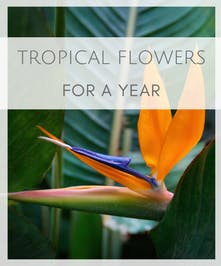 Tropical Flowers for a Year