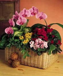 Garden basket filled with blooming plants and orchids.