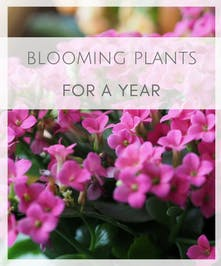 Blooming Plants for a Year