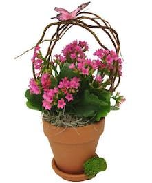 Sweet Kalanchoe Plant adorned with butterfly