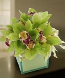 Cymbidium orchids in a clear glass cube vase.