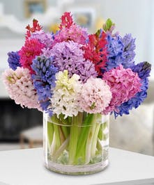 Hyacinths in hues of red, purple and pink in a clear glass vase.