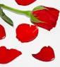 Two Bags of Rose Petals