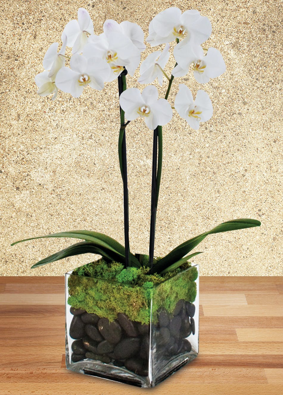 Two orchids in a clear glass cube vase accented with rocks and moss.