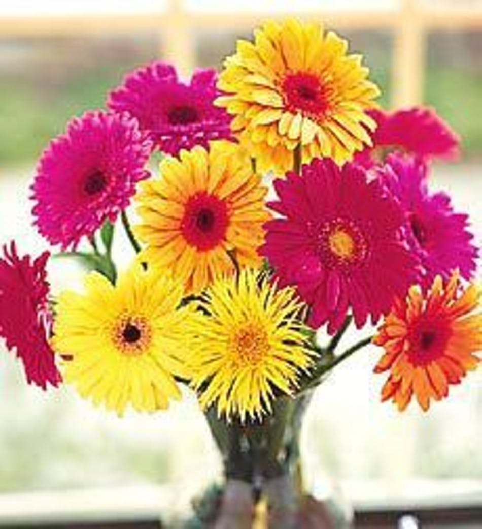 Gerbera daisy vase flowers marcoislandflorist delivery by 10am tomorrow available order within izmirmasajfo