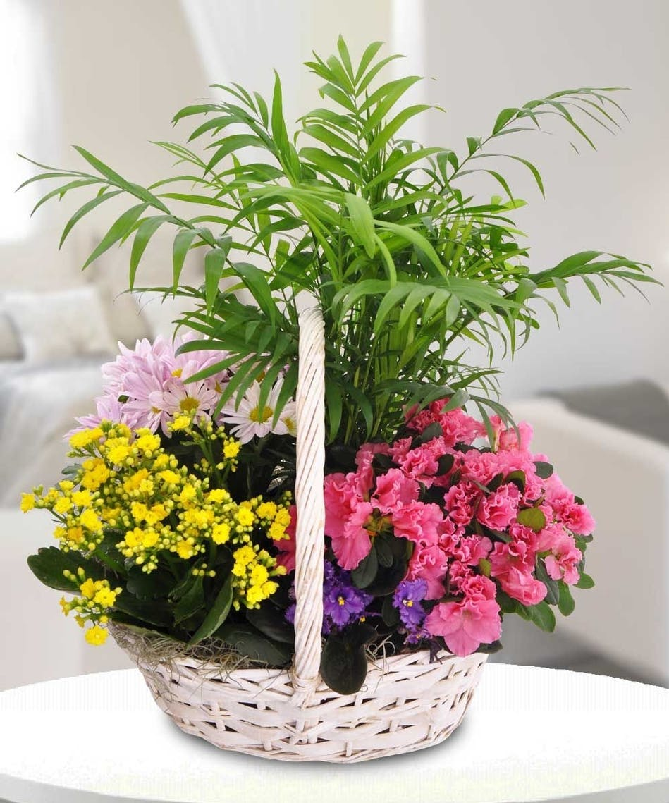Blooming Garden Basket A Variety Of Plabts Marco Island Flower Florida Fl Florist Naples