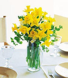 Charming Daffodils