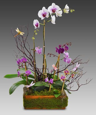 Assorted Orchids